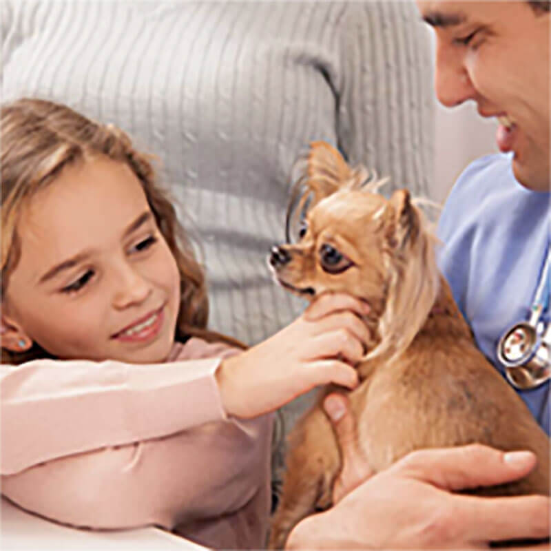 young girl petting dog in vet's arms