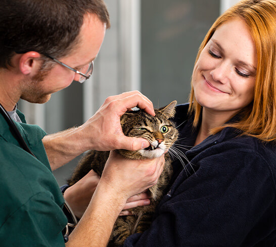 veterinarian examining a cat in a lady's arms